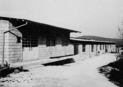 Occhiodoro azienda avicola dal 1960